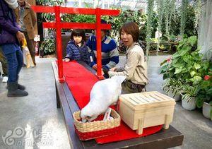 日本各地动物园内的鸟类成主角