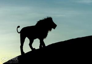 澳摄影师深入非洲六年 拍绝美动物剪影