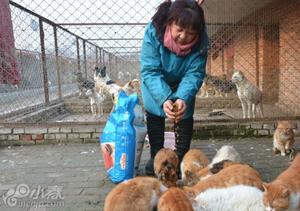 河北一女子16年救助流浪猫狗6000多只