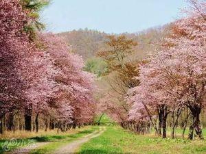 旅途 | 2017日本赏樱攻略出炉