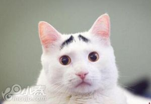 """日本迎来""""猫之日"""" 猫咪散步街道成为看猫胜地"""