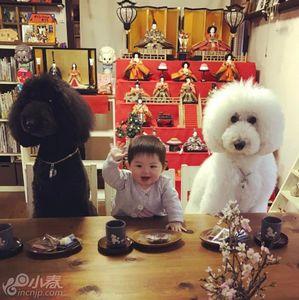 日本萌娃走红网络 与狗狗温馨同框超暖心