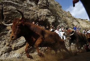 西班牙奔牛节 人牛山上赛跑场面惊险