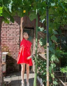 山西居民种出两米多长丝瓜