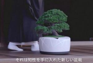 一个盆栽居然能和人聊天