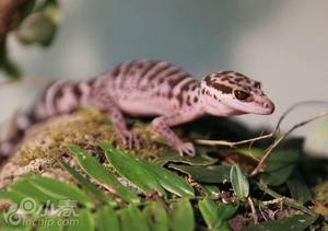 中国林业工作者在海南发现新物种