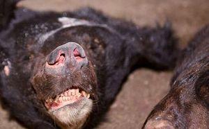 四川警方查获近两吨野生保护动物