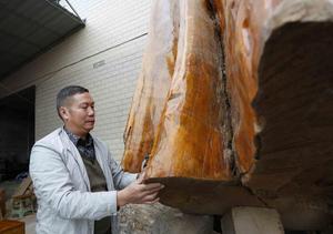 世界最大金丝楠木 重16吨价值超千万