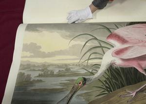 世界上最贵印刷书《美国鸟类》罕见亮相
