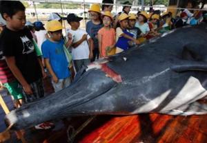日本年内准备重启商业捕鲸