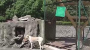 武汉一动物园以狗充狼?园方回应