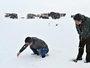 三江源头迎来降雪 积雪深度达8厘米
