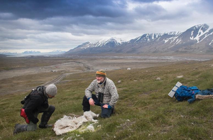 北极地区约200头驯鹿饥饿而死