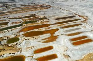 白墩子盐沼湿地再现湿地色彩斑斓美景