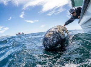 伸手可及的海洋大鲸鱼