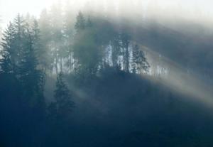 乌克兰喀尔巴阡山迷雾缭绕