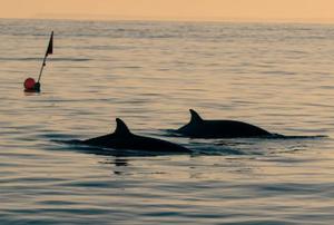 海洋生物研究团队在墨西哥海域疑发现新鲸种