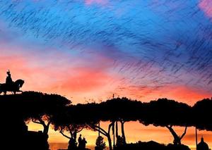 意大利罗马市中心椋鸟成群飞舞
