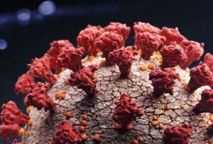 英国发现的变异新冠病毒再次突变