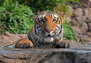 印度孟买动物园重新向公众开放