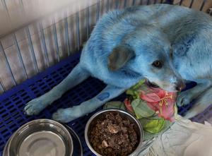 俄一废弃化工厂附近发现蓝色流浪狗