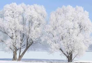 土耳其冬日树木结满白霜