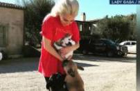 因抢劫Lady Gaga宠物狗被逮捕