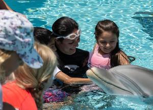 海豚代替圈养海豚表演杂技招待游客