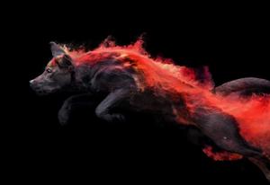 当空中腾跃的狗狗遇上彩色粉末