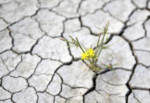 土耳其持续遭遇旱情