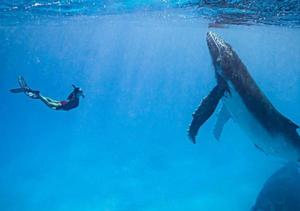 """潜水模特与鲸鱼深海""""共舞"""" 画面和谐极致唯美"""